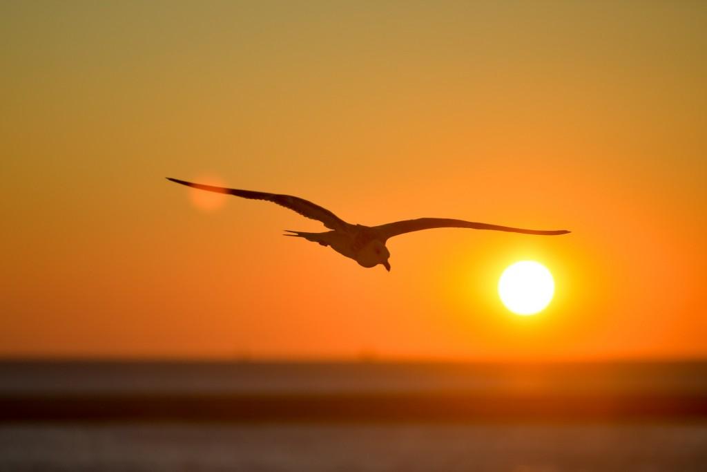 seagull-601287_1920